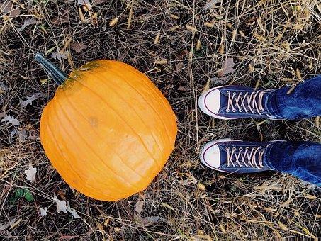 pumpkin-2873604__340